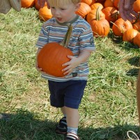 Pumpkin Patches and Other Fall Festivities