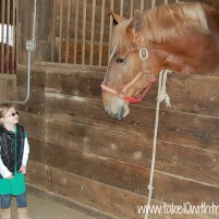 An Afternoon with the Budweiser Clydesdales