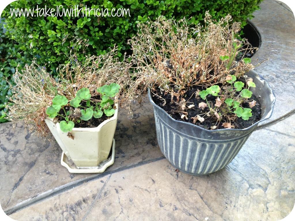 Dead-planters