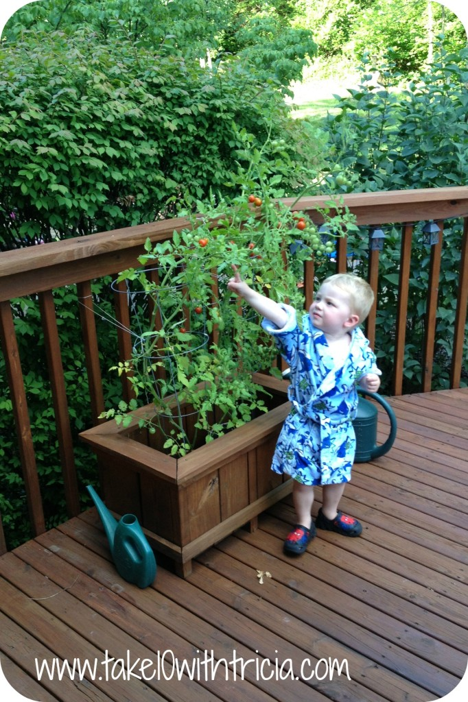 Henry-with-Tomato-plant-in-deck-box