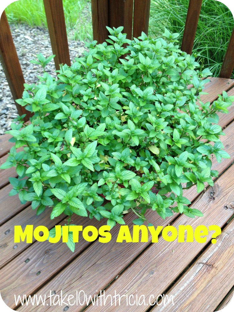 Mint-plant-on-deck
