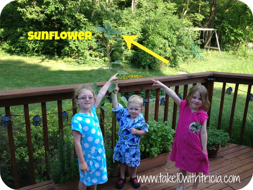 Sunflower-on-deck