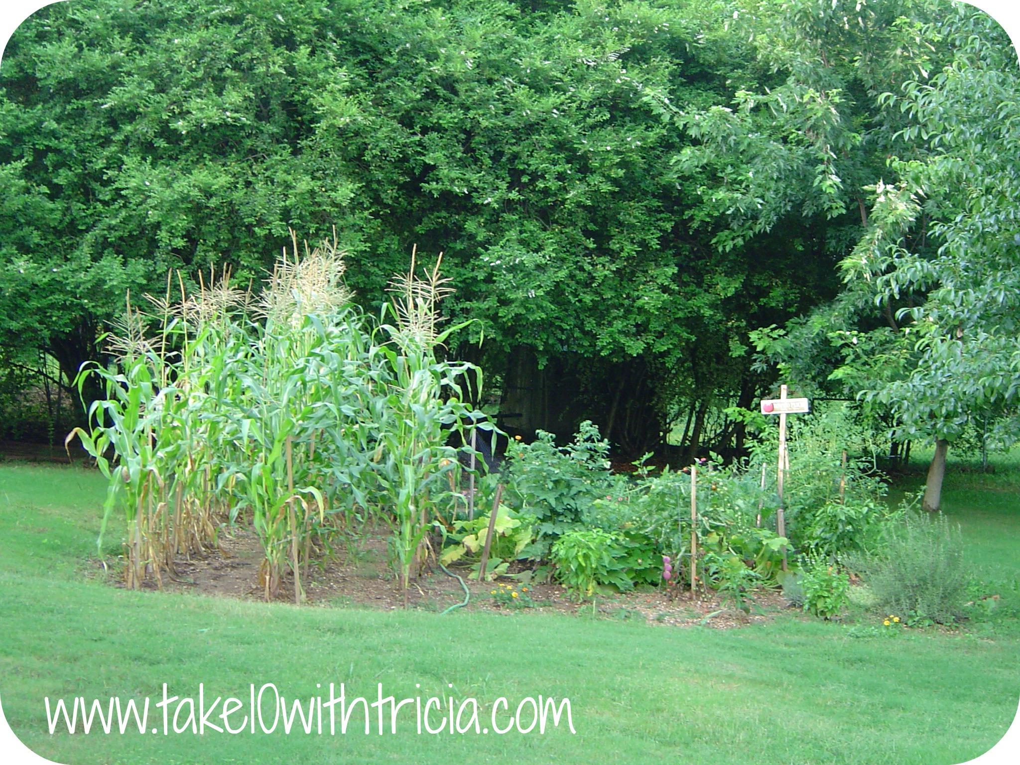 Backyard Garden Birmingham
