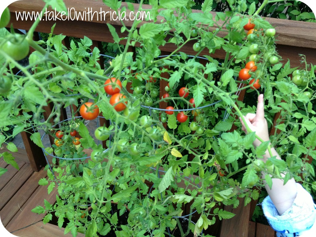 Container gardening on our deck take 10 with tricia - Best tomato plants for container gardening ...